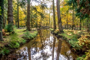 New Forest Photography Autumn
